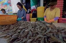 Thaïlande : les exportations de crevettes pourraient progresser de 20% l'an prochain