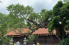 Vinh Nghiêm, pagode incontournable dans la province de Bac Giang
