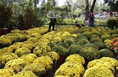 Des marchés aux fleurs à Huê