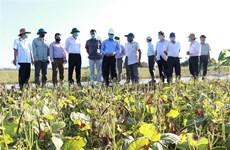 Ninh Thuan cherche à augmenter sa production en saison sèche