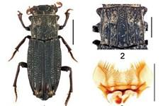 Découverte de nouvelles espèces d'insectes au Vietnam