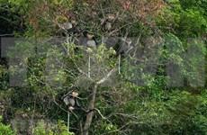Kon Plông – un trésor de biodiversité à préserver