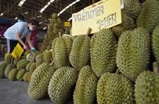 Forte hausse des exportations de durian thaïlandais vers la Chine