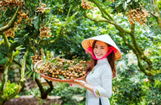Les longanes frais du Vietnam conquièrent le marché australien