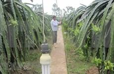 L'EVFTA promet de doper les exportations agricoles du Vietnam