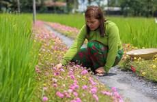Hô Chi Minh-Ville : des rues fleuries contre les déchets
