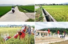 Agriculture : Hanoï fixe l'objectif d'une croissance d'au moins 3% en 2021