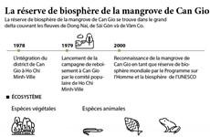 La réserve de biosphère de la mangrove de Can Gio
