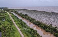 Delta du Mékong : développement durable pour s'adapter au changement climatique