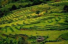Immersion automnale dans les rizières en terrasses de Ta Leng