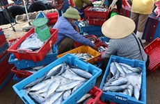 Pêche INN : de nombreux efforts pour la suppression du carton jaune