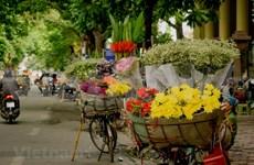 Hanoï et ses quatre saisons de fleurs