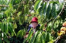 Agriculture : Objectif de plus de 42 milliards d'exportation en 2019