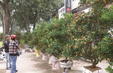 Escapade sur les marchés aux fleurs du Têt à Hanoï