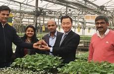 Vietnam - Inde : Riches potentiels de coopération dans l'agriculture