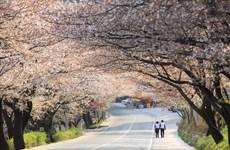 Lancement de la campagne de promotion du tourisme de printemps en R. de Corée