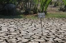 Le delta du Mékong lutte contre la sécheresse et la salinisation