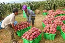 Le commerce bilatéral Vietnam-Chine atteint 106 milliards de dollars en 2018