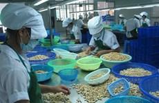 Environ 1,2 milliard de dollars d'exportations de noix de cajou