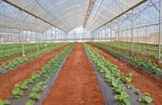 Can Tho et la Nouvelle-Zélande renforcent leur coopération dans le secteur agricole
