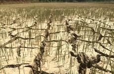 Le Vietnam soutient la déclaration d'urgence sur la nature et l'homme