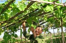 Ha Tinh ambitionne de répondre aux normes de la Nouvelle ruralité en 2025