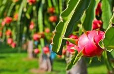 Dynamiser l'exportation de produits agricoles vietnamiens en Inde
