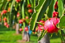 Exportation de fruits en 2019: excédent commercial de près de 2 milliards d'USD