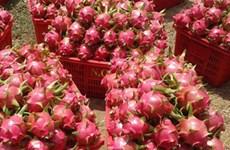 Un lot de huit conteneurs de fruits du dragon du Vietnam expédié aux Etats-Unis