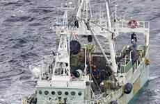 Cinq marins vietnamiens portés disparus après le naufrage d'un cargo au large du Japon