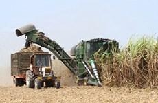 Stimuler les exportations de sucre vers la Chine et l'UE