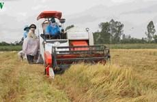 Le delta du Mékong, garant de la sécurité alimentaire nationale