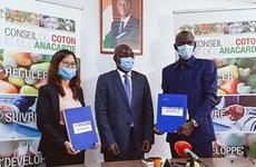 T&T Group achète toute la quantité d'anacarde brute de Côte d'Ivoire