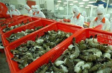 Croissance des exportations nationales de crevettes en Corée du Sud