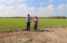 La sécheresse et l'intrusion d'eau salée causent de grosses pertes à Tra Vinh