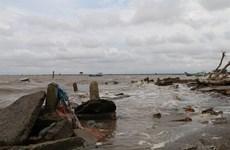 Tien Giang va planter 250 ha de forêts de protection côtière