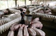 Le gouvernement veut professionnaliser et moderniser l'élevage