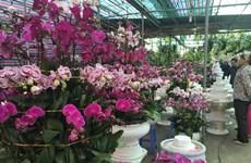 Le marché floral de Van Phuc bat son plein à l'approche du Têt
