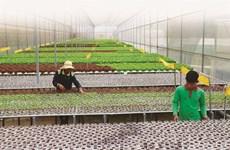 L'agriculture high-tech, clé de la restructuration économique