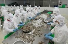 La crevette crue non décortiquée vietnamienne accéderait au marché australien