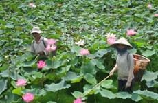 Ouverture de la Fête des fleurs de lotus à Dông Thap
