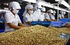 La noix de cajou vietnamienne appréciée sur le marché américain