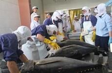 Les exportations de thon au Moyen-Orient poursuivent sur leur lancée