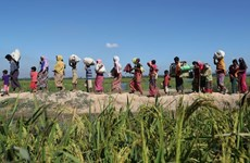 Le Bangladesh et le Myanmar discutent du rapatriement des Rohingya