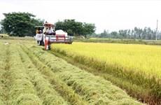 Appliquer les hautes technologies dans la production agricole dans le quadrilatère de Long Xuyen