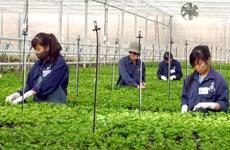 L'agriculture high-tech prend son envol au Vietnam
