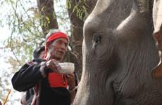 Les éléphants chez les M'Nong