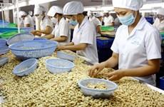 Le Vietnam exporte 3,52 milliards de dollars de noix de cajou en 2017