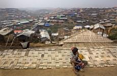 Le Bangladesh et le Myanmar prêts à un retour des réfugiés rohingyas