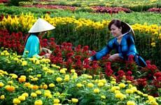 Le village floral de Tân Quy Dông resplendit de couleurs